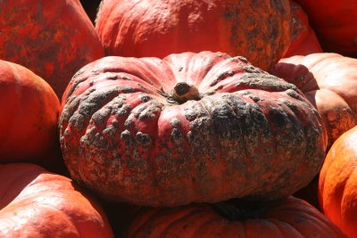 Best Pumpkin Patches in the Chicagoland Area