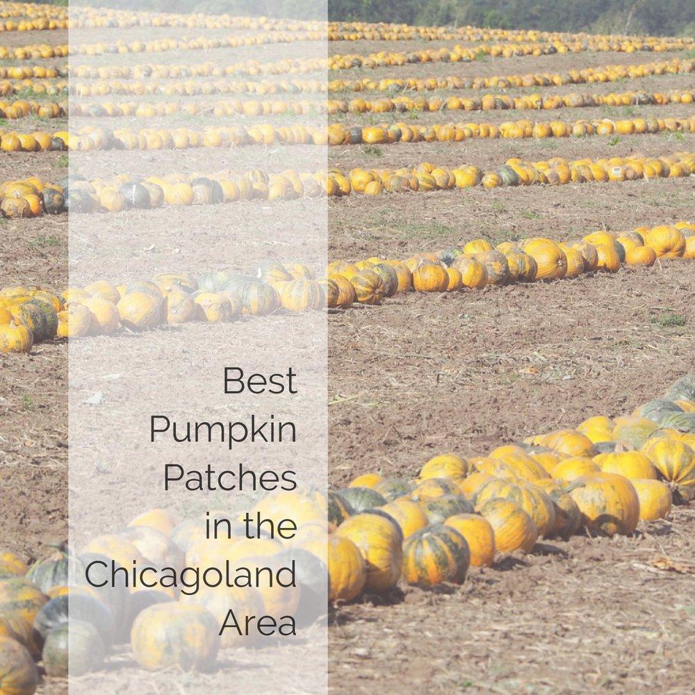 BEST PUMPKIN PATCHES IN CHICAGOLAND