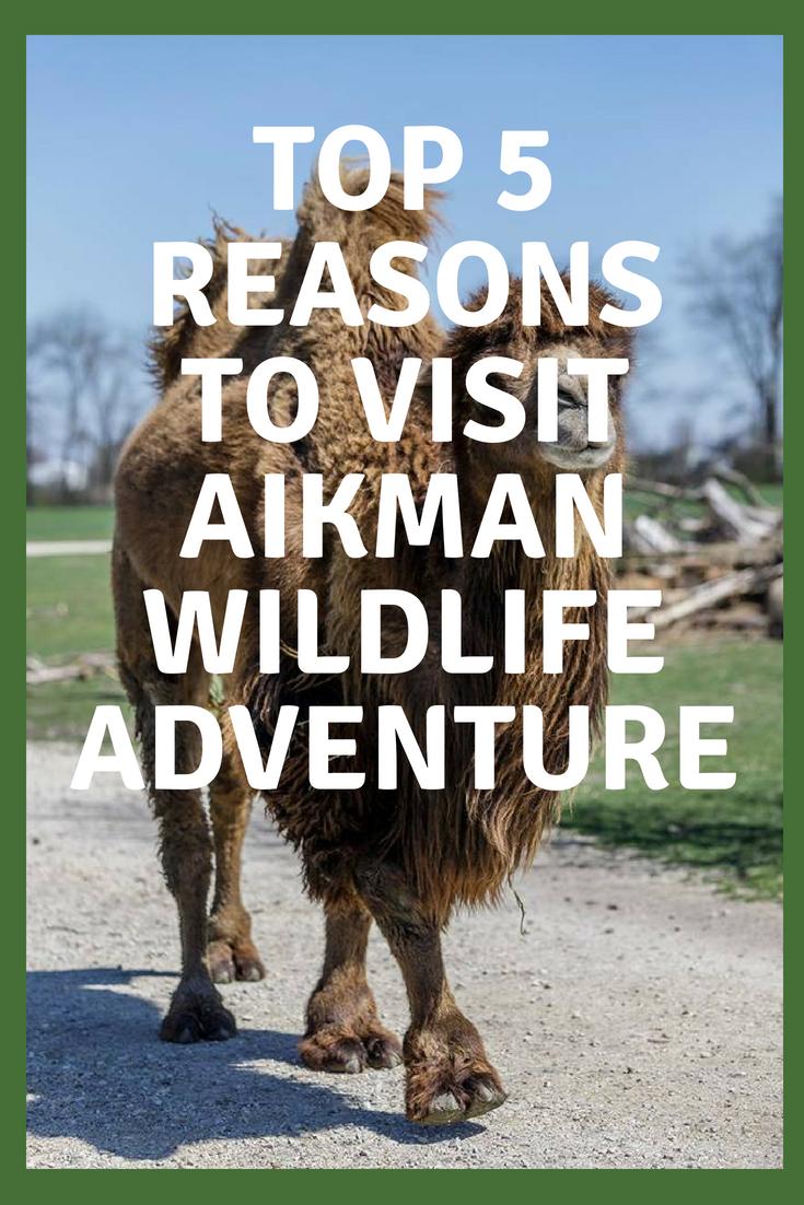 Top 5 Reasons to Visit AIKMAN WILDLIFE ADVENTURE