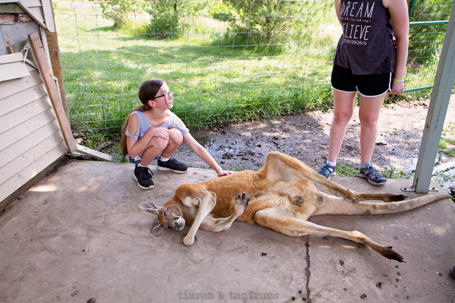 Top 5 Reasons to Visit AIKMAN WILDLIFE ADVENTURE