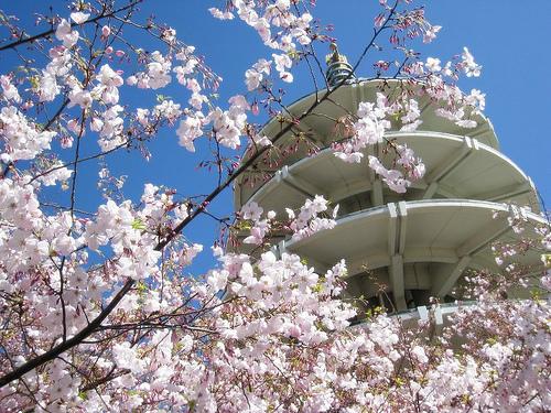 Cherry Blossom Festival.jpg