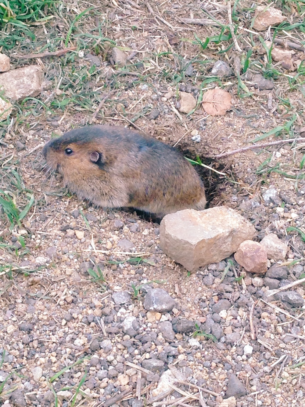 we saw this cute gopher and joe felt inclined to photograph it.