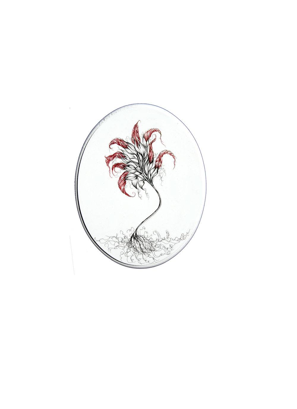 """Alpinia  ink and pencil on wood  10"""" height x 8"""" wide oval"""