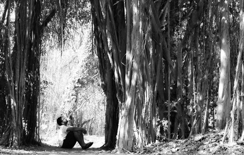 Tree Watching Hari