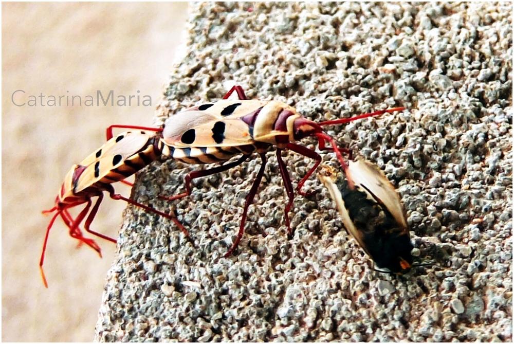 bugs5.jpg
