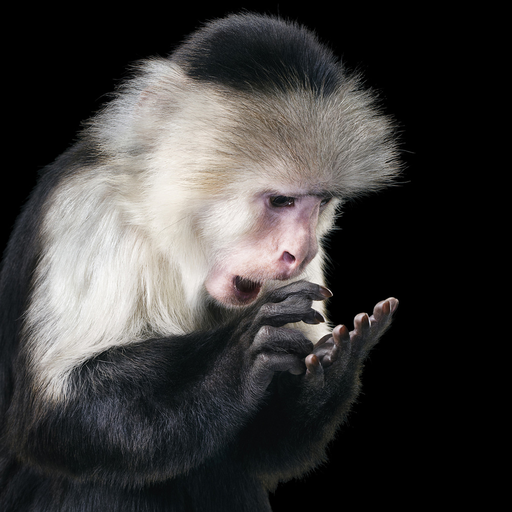 0013_Capuchin copy.jpg