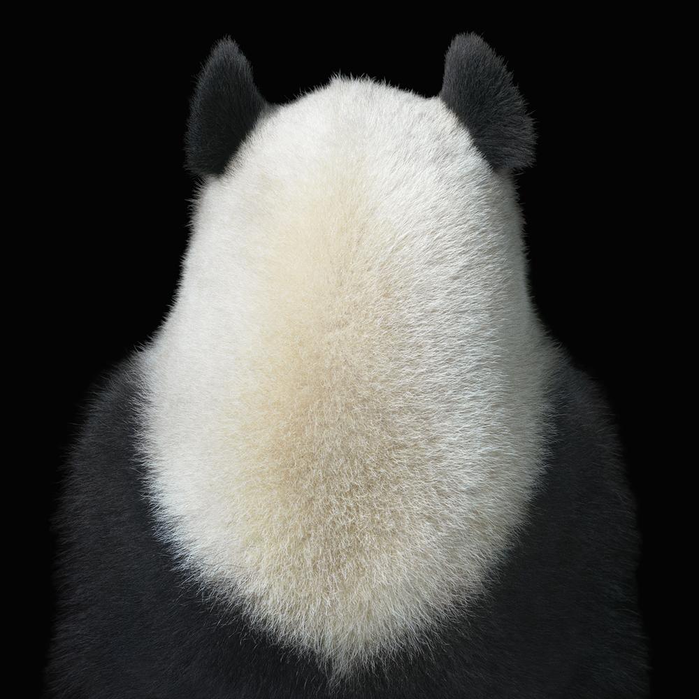 0020_Panda_Back copy.jpg