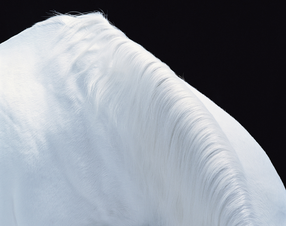 Equus-UK-White Horse Series-Mountain