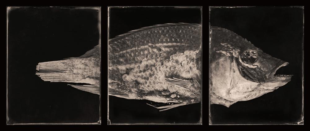 FishTripR2*HEIST.jpg