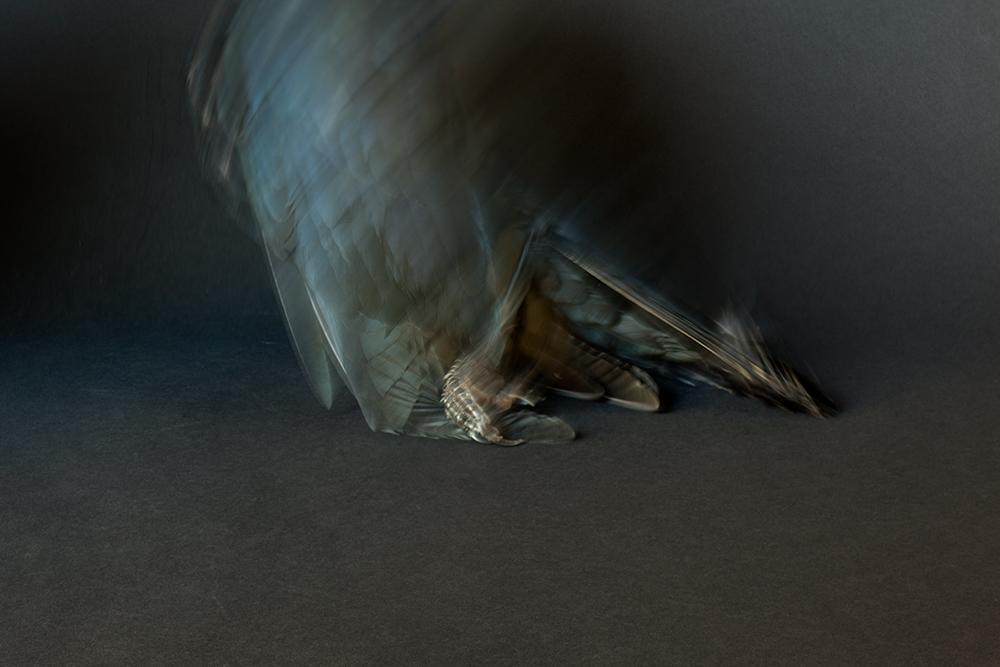 02.Silas_RAVEN (black)_1191.jpg
