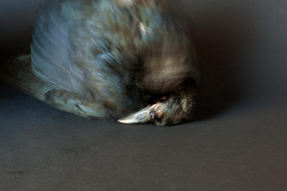 03.Silas_RAVEN (black)_IMG_1198.jpg