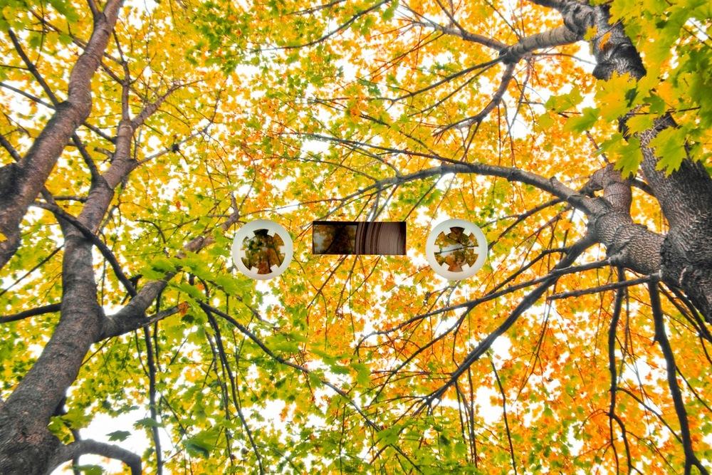 trees1-fulljpeg.jpeg