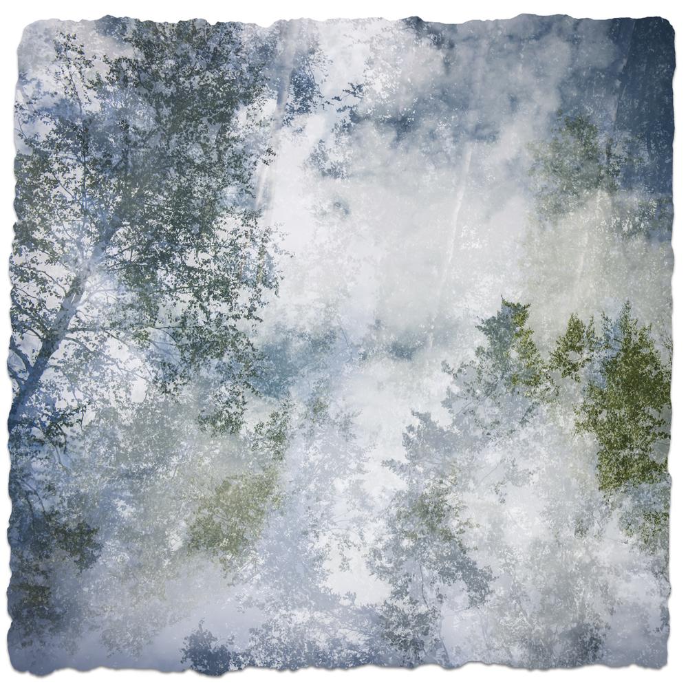 Alaska Trees #2