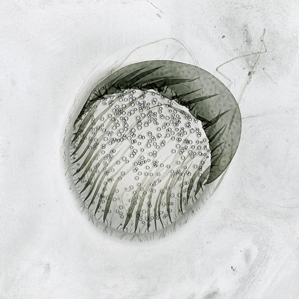 IMG 016