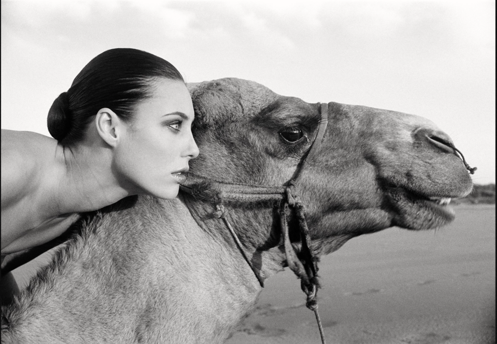 MARC LAGRANGE // THE CAMEL