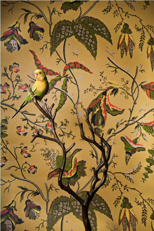 claire rosen // Common Parakeet no. 6977 birds of a feather, 2012