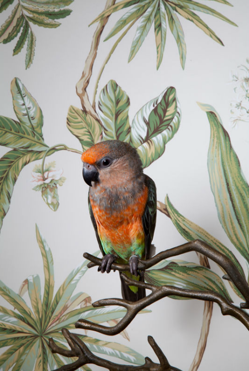CLAIRE ROSEN // RED BELLIED PARROT NO. 7799 BIRDS OF A FEATHER, 2012