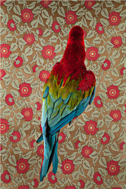 CR - Red And Green Macaw No 7301.png