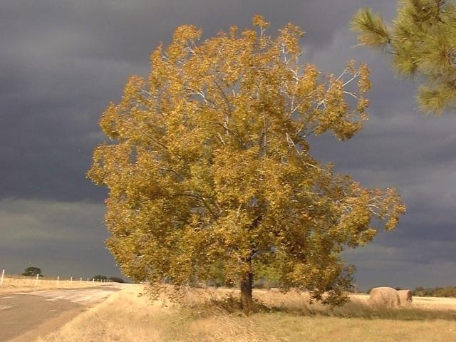 Rural Landscapes -
