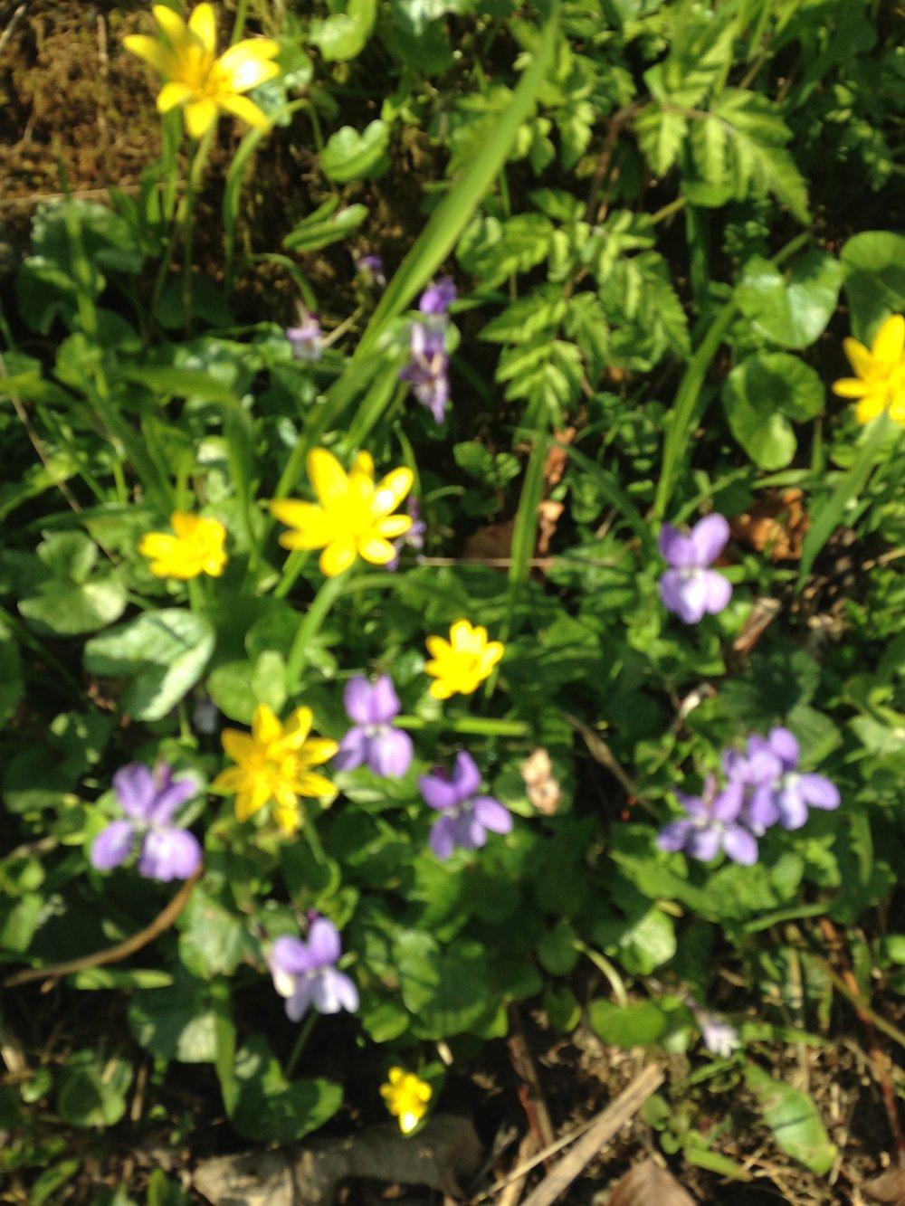 Springflowers2.jpg