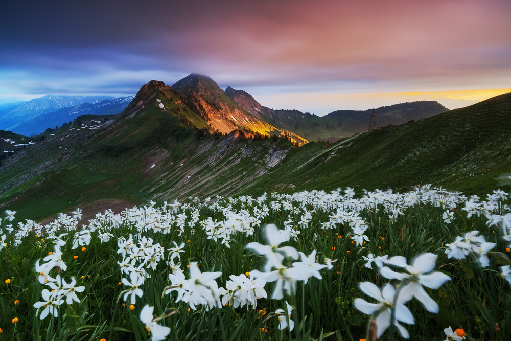 Francois Marclay_landscape_06.jpg