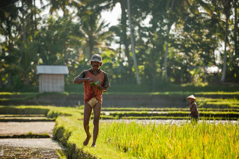 Francois Marclay_Bali_22.jpg