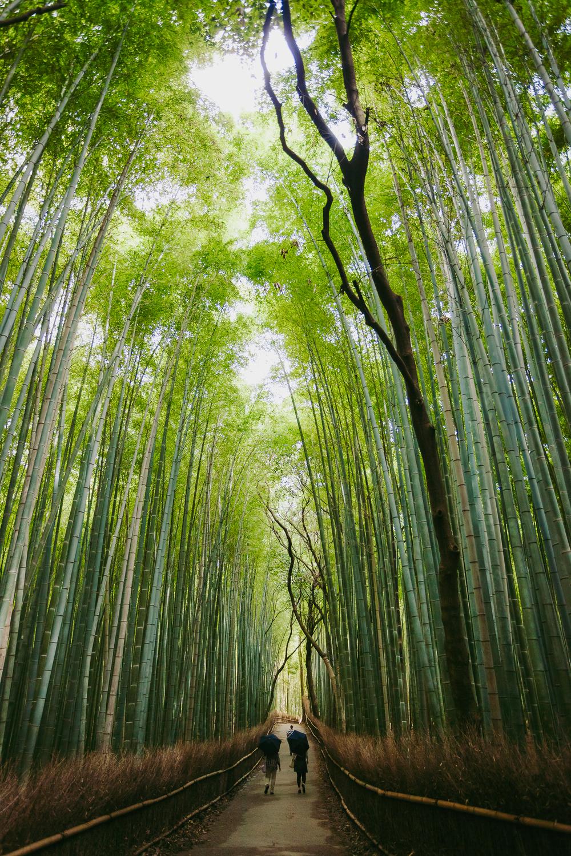 Francois Marclay_Japan_55.jpg