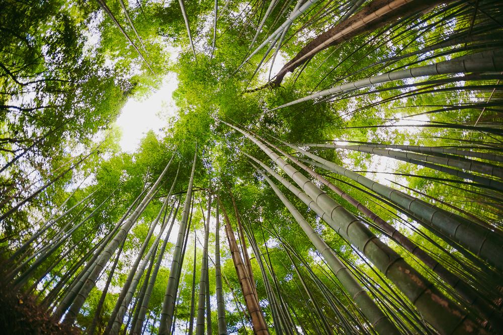 Francois Marclay_Japan_56.jpg