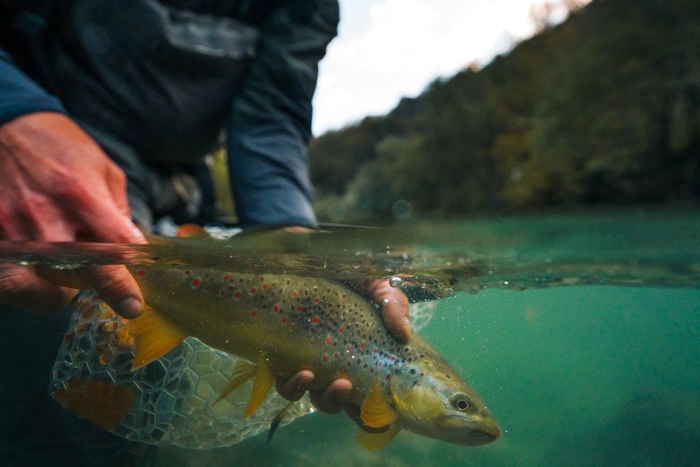 Francois_flyfishing_9.jpg