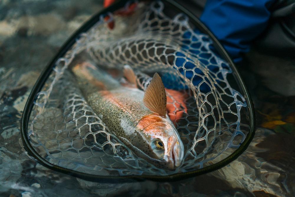 Francois_flyfishing_16.jpg