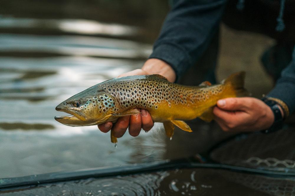 Francois_flyfishing_20.jpg