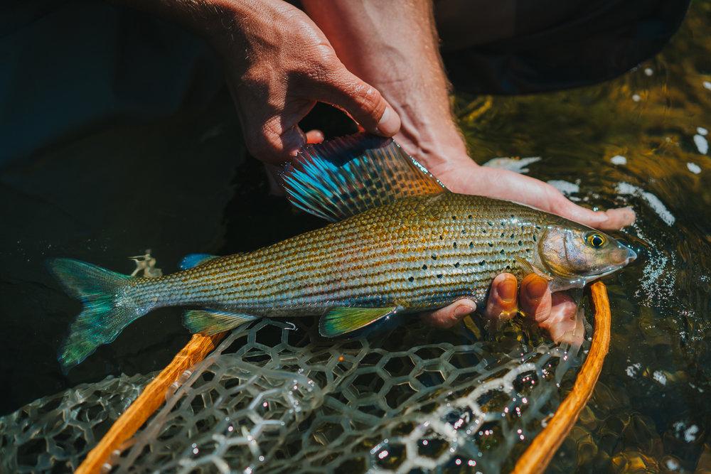 Francois_flyfishing_39.jpg
