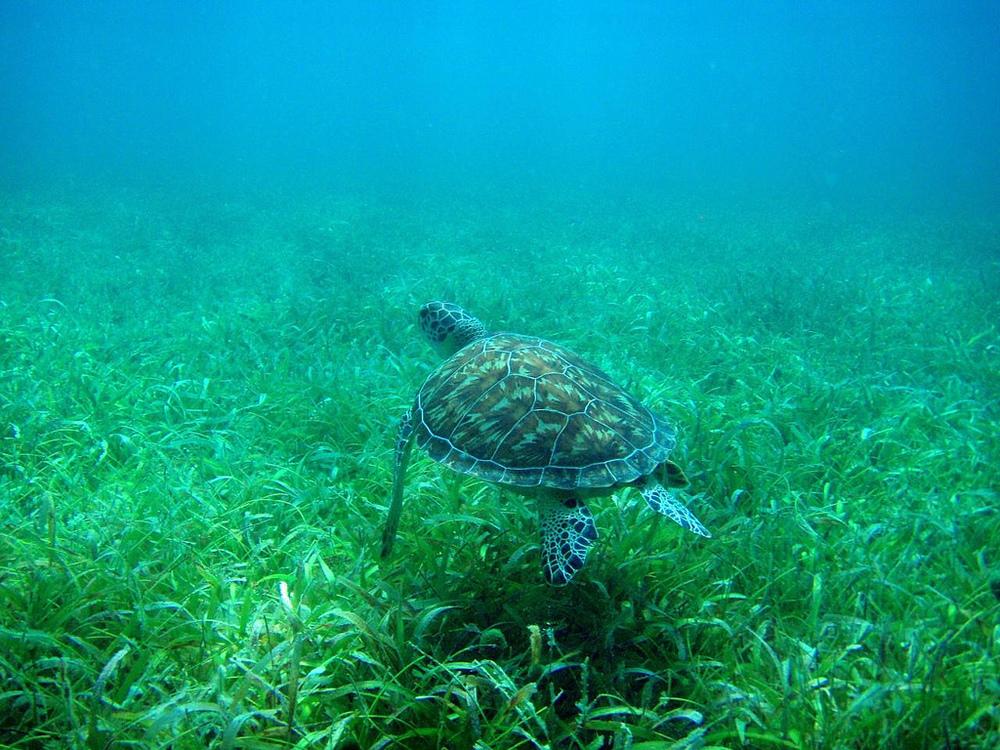 C turtle.jpg