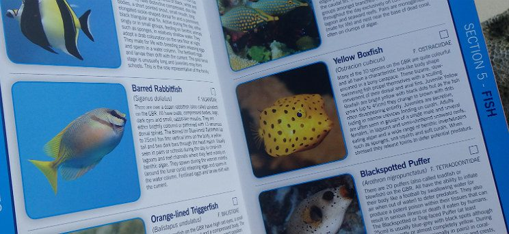 Reef_Field_Guide-744x342.jpg