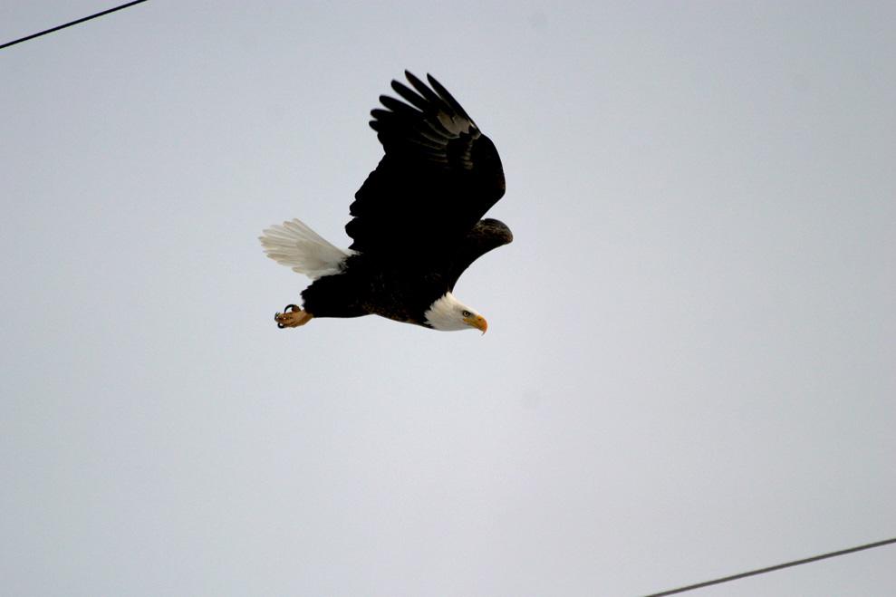 BAEA Migration 8.jpg
