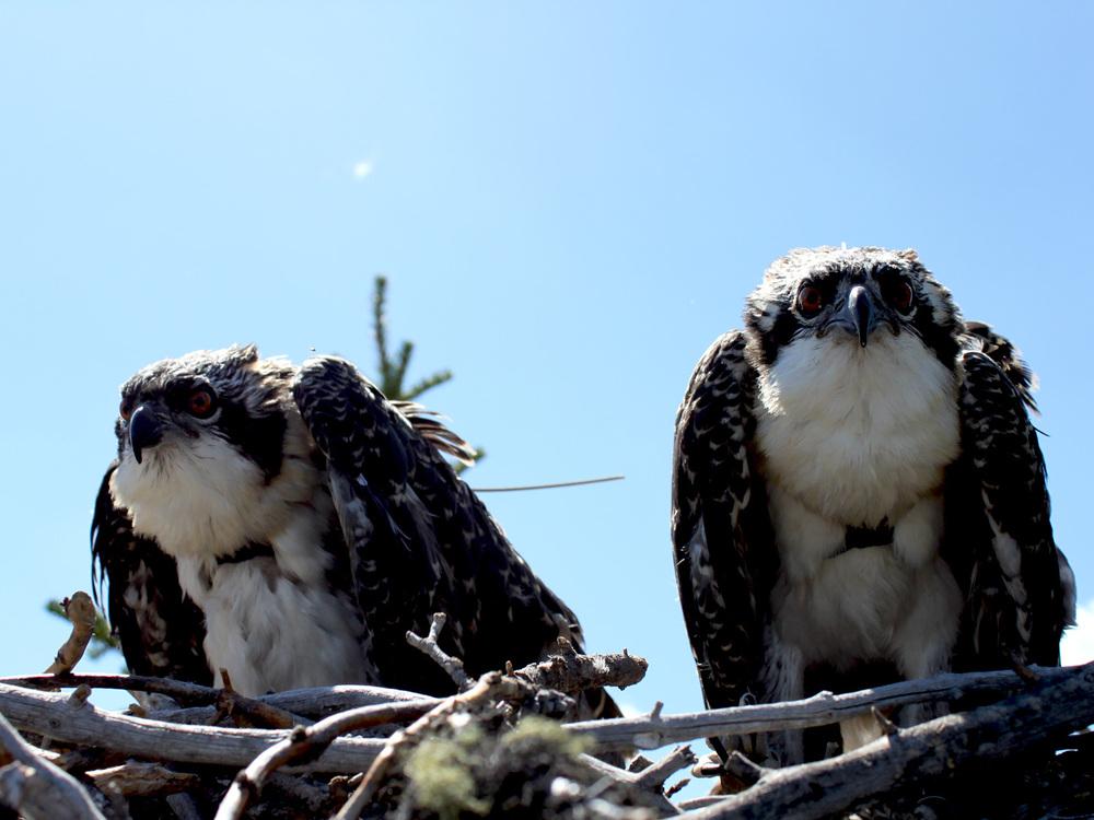 Osprey 19.jpg