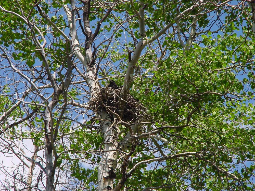 w btb nest1.jpg