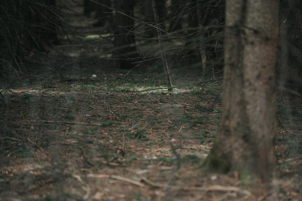 Raluca in Vermont-136.jpg