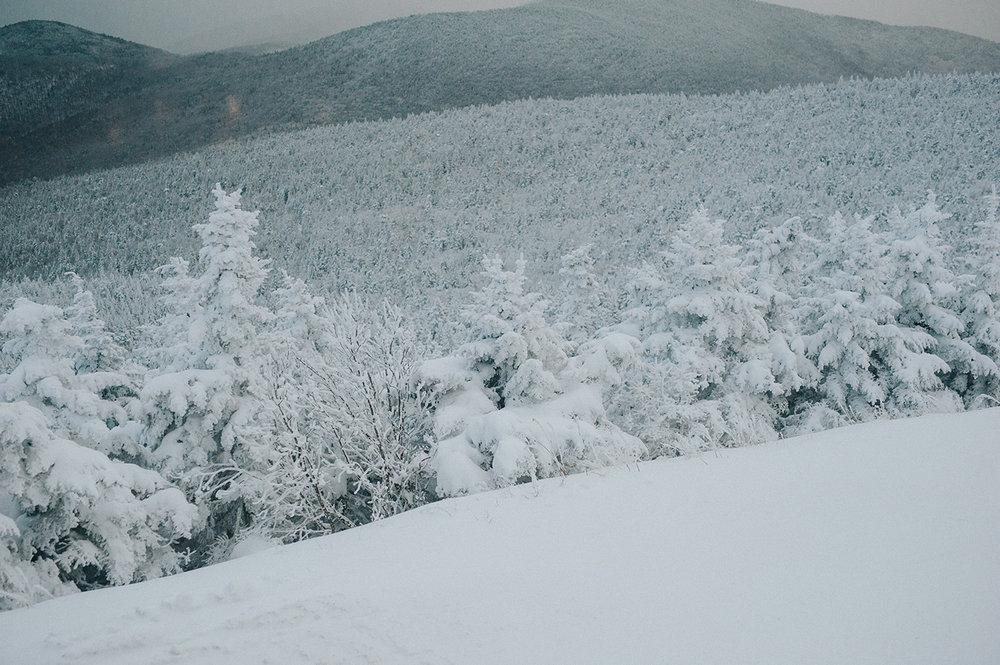 trees-covered-snow-killington-peak-vermont-idena-wedding-photographer.jpg