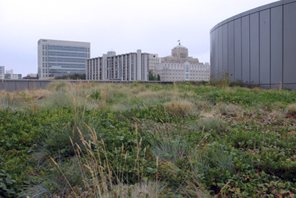 Justice Center Green Roof - planting close up