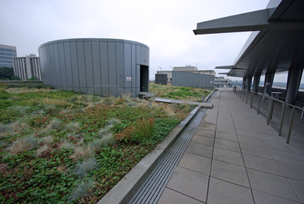 The Justice Center Green Roof - the length of the vegetated area