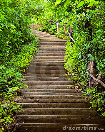 stairway through vegetation.jpg