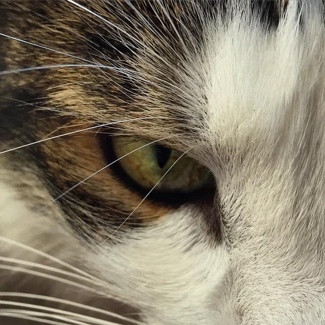 nimbus eye.jpg