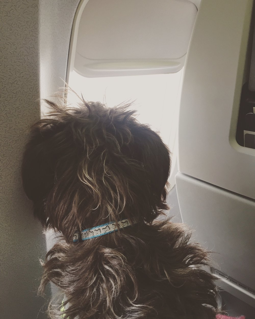 Bodhi's first plane flight!