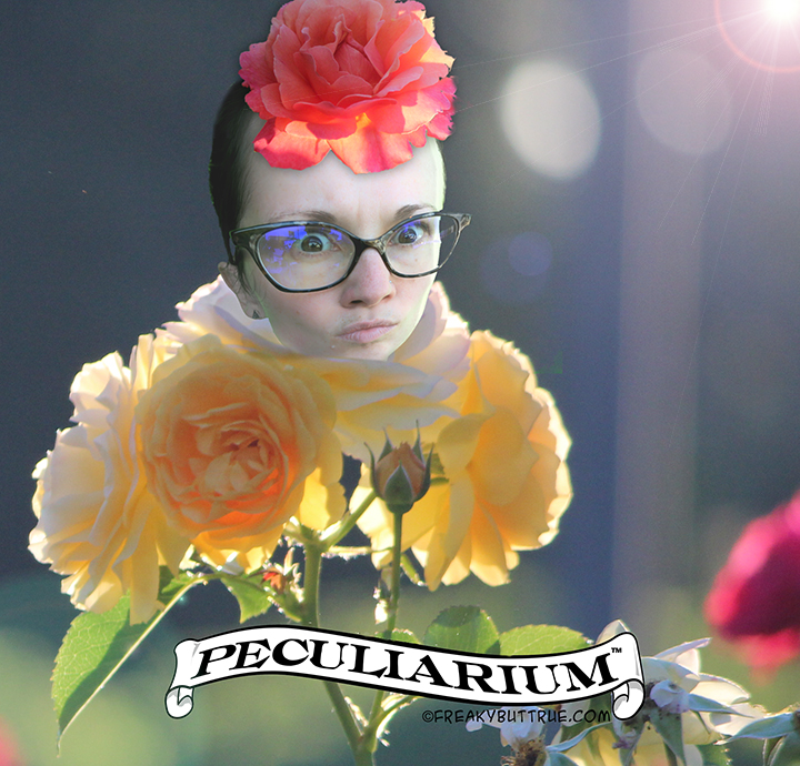 rose ladysm.jpg