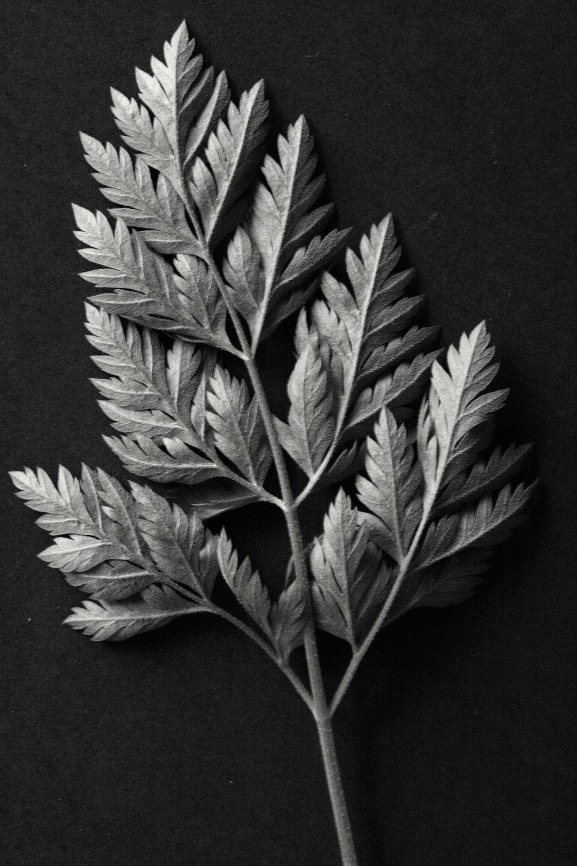 weed leaf bw.jpg