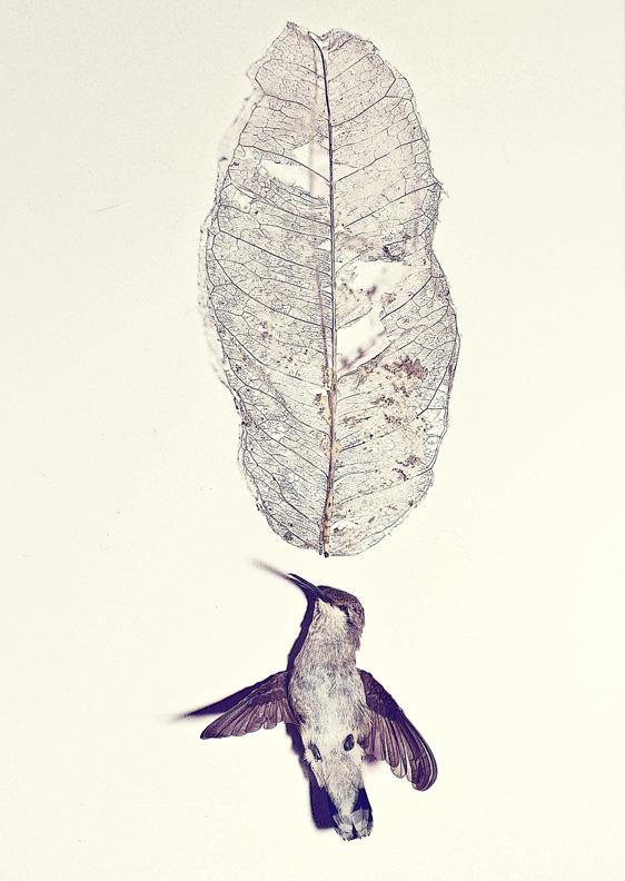 humming bird 2 s.jpg