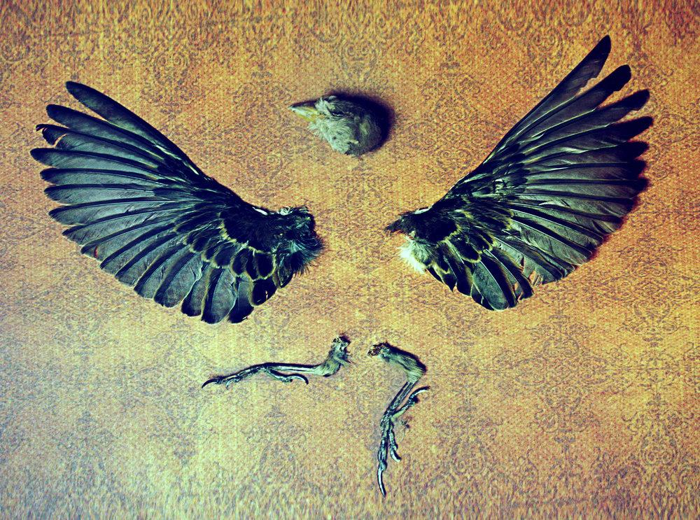 sparrow parts 7.jpg