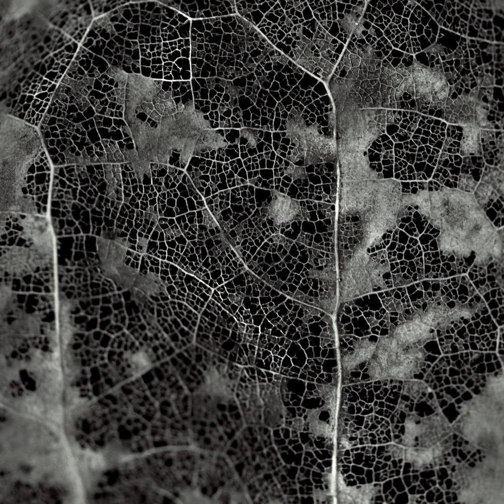 leaf decay 5.jpg