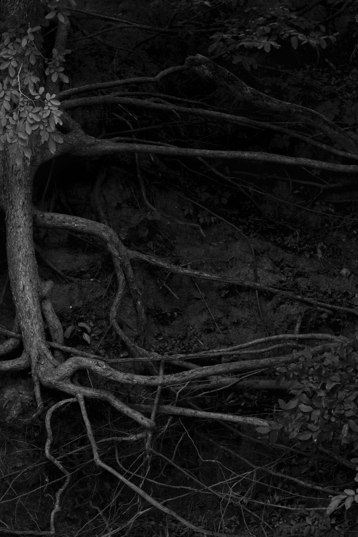 tree walnut creek 2 bw.jpg